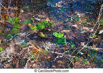 frozen puddle in early spring