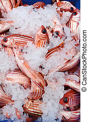 Frozen red snapper fish on display in Middle eastern fish market