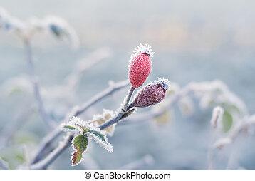 Frozen rose hip