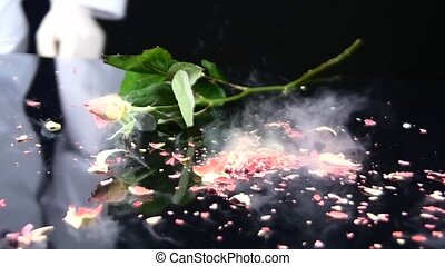 Frozen rose on the table falls and breaks. Slow motion