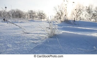 frozen sunlight grass nature sways in the wind in the winter snow falls beautiful sun glare
