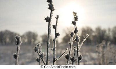 frozen sunlight grass sways in the wind in the winter snow falls nature beautiful sun glare