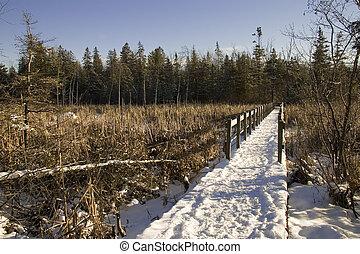 Frozen swamp
