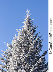 Frozen tree and blue sky - Frozen tree on Winter's Tale and...