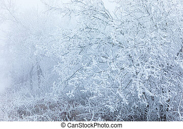 Frozen tree branches in the forest