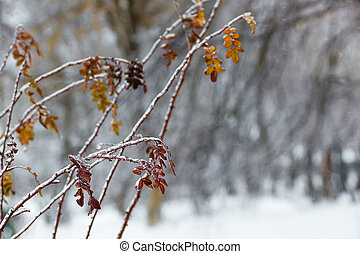 Frozen tree branches in winter