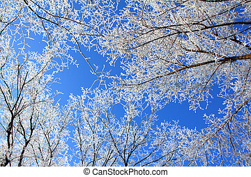 Frozen tree branches under blue sky