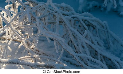 Frozen tree branches close-up