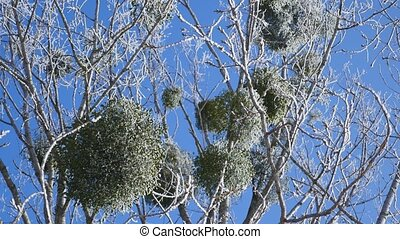 Frozen tree crown on blue sky background