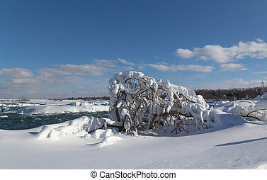 Frozen Tree in the Winter