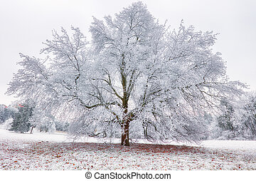 Frozen tree in winter with snow
