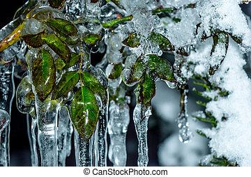 Frozen tree leaves