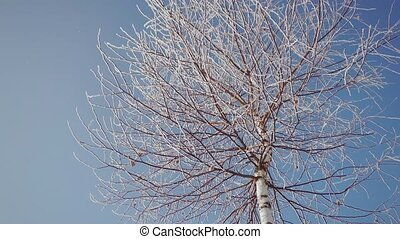 Frozen Tree Top