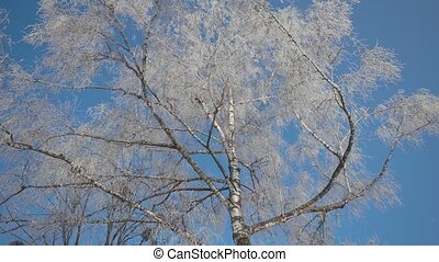 Frozen Tree Top - Upper view of frozen tree top in sunny...
