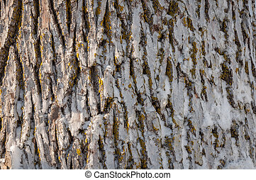 Frozen tree trunk close-up