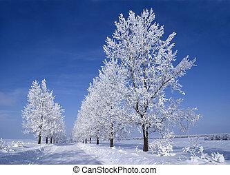 Frozen trees around the road