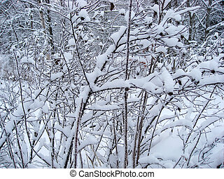 Frozen trees background