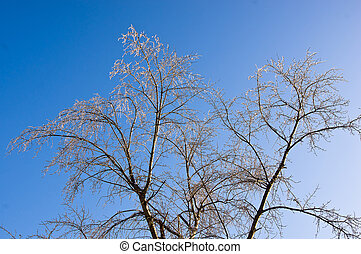 Frozen trees in the park ob blue sky background