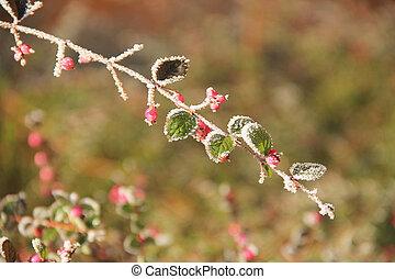frozen twig