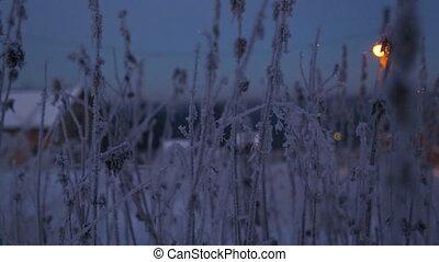 Frozen twig of nettle in winter
