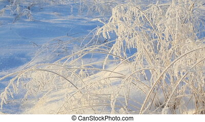 Frozen twigs of grass in winter