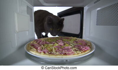 Frozen uncooked ham and cheese pizza defrosting in the microwave oven inside view