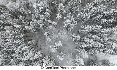 frozen very beautiful trees. Winter tale. Landscape to...