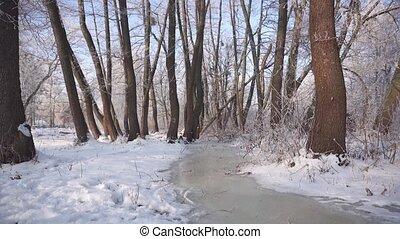 Frozen Water Flow in Forest