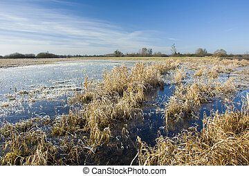 Frozen water on a grassy meadow and blue sky