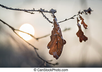 Frozen winter leaves at sunset