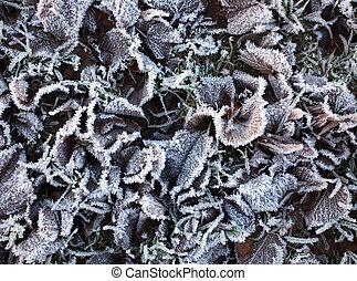 frozen winter leaves background