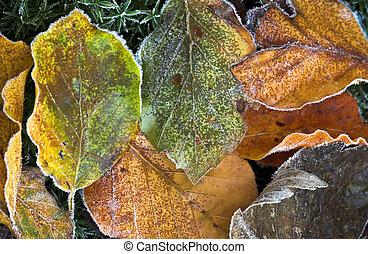 Frozen winter leaves