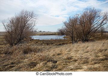 Frozen winter pond in a dry grassy landscape