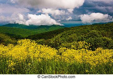 fruehjahr, ansicht, von, der, appalachians, von, silhouettentrieb, in, shenandoah nationalpark, virginia