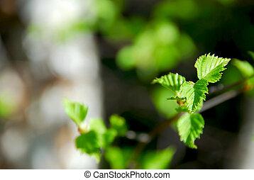 fruehjahr, blätter, grün
