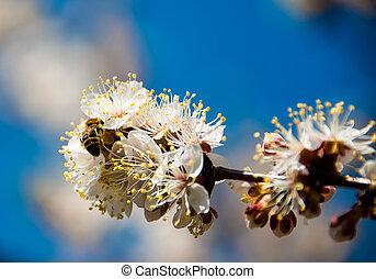 fruehjahr, blühen, blumen, zweig