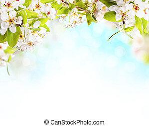 fruehjahr, blüten, weiß, hintergrund