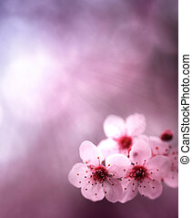 fruehjahr, hintergrund, mit, blumen, und, rosa, farben