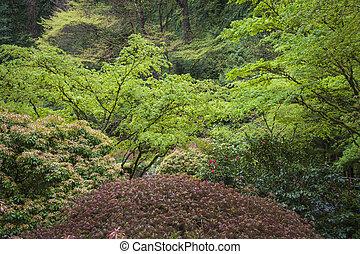 Kleingarten fruehjahr busch wachsen lorbeer hecke - Japanischer kleingarten ...