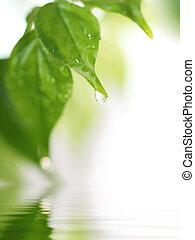 fruehjahr, natur, hintergrund
