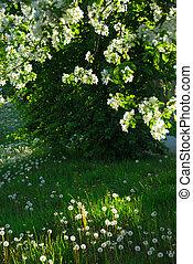 fruehjahr, obstgarten