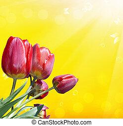 fruehjahr, rote tulpe, flower., natur