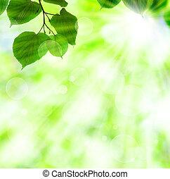 fruehjahr, sonne- lichtstrahl, mit, grüne blätter