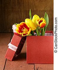 fruehjahr, tulpen, blumen