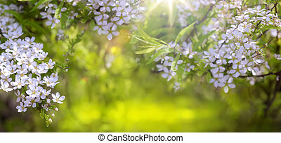 fruehjahr, umrandungen, hintergrund, mit, blüte