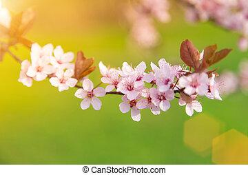 fruehjahr, umrandungen, hintergrund, mit, rosa, blüte