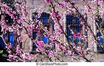 fruehjahr, umrandungen, oder, hintergrund, kunst, mit, rosa, blüte