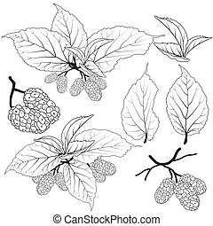 Fruit and leaves mulberry line vector