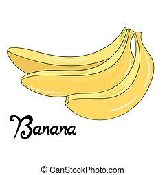 Fruit banana vector illustration