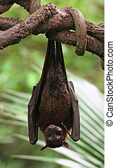 Fruit Bat Animal Hanging From a Tree